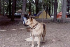 dog_89